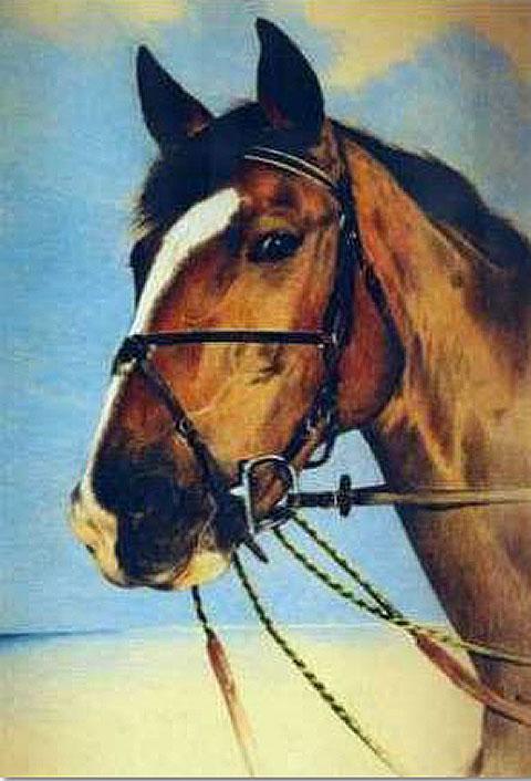 Artiste animalier portrait sur commande